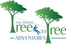 Tree to Tree Adventures / Tallahassee Tree to Tree Adventures- zip line and adventure course
