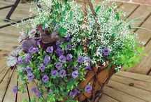 hangingflower