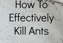 kill ants and everything