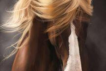 Horse's photos