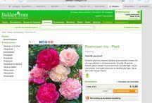 Vaste plantenonderzoek
