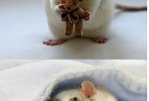 Ratatouille / Ratties and more Ratties. / by ronel meyer