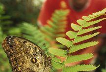 Eco-tourism / A STEP CLOSER TO NATURE