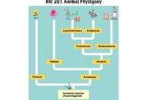 Teaching - Classification / by Kristina Nicole