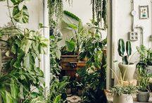 houseplant homes