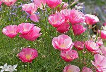 Flores/imagens
