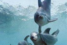 Delfínes