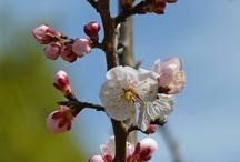 Flower-花-
