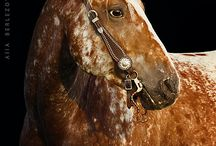 Hester og andre søtinger