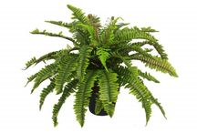 Artificial Office Plants / Perfect artificial plants for your office!