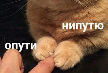 кошки)))