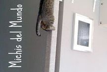 Mundo gatos