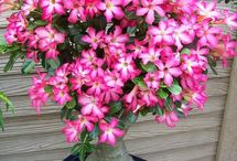 λουλουδακια...