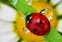 Lady bug &