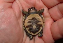 I Want A Baby Turtle / by Brittany Wolken