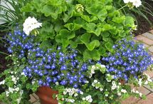 potplants for shade