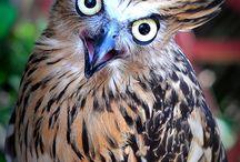 owl ❤