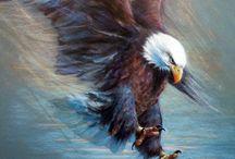 Wildlifebilder / Ästhetisch-realistische Tierbilder machen die Eleganz der Bewegung und die Emotion des Augenblicks unvergänglich.