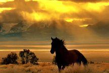 Horses / by Erika Thompson