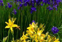 Eplehagen Flower mix - color combos / Gardening