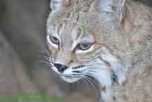 Animal Photos / Favorite Animal Photos