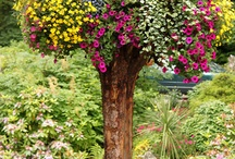 annual plants design