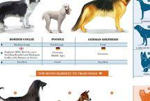 Dog center!