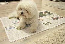 Doggy Time / A doggy called Aksu took my heart.