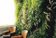 Green Walls | Living Walls