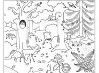 les a lesní zvířata