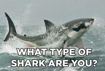 Live every week like shark week! / by Christina Helscel