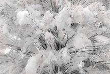 Seasons......Winter is here