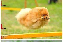 Puppy Overload!!!