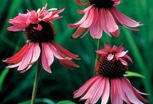 Gardening / by Terri Moor