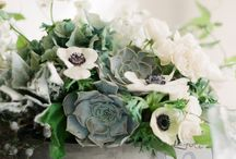 Succulent styling / by Anette Fragile Kim
