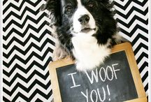 Pet Photography Tips / I love to take pictures of my dog!  See them all here:-- http://pitlandia.blogspot.com/