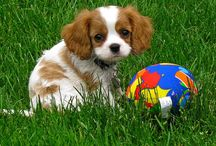 Dog / Fluff