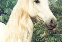 Unicorns / Mystical images of the archetype of Unicorns. Unicorns are real. B E L I E V E.  Xoxo <3 / by Heidi Ohlander