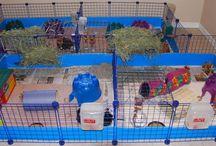 guinea pig homes
