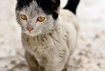 Black cats ❤️