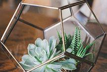 Plant terrariums.