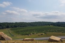 Gorgeous Virginia Vineyard Views / Virginia's vineyards offer truly breathtaking views. Check out our favorites and then visit VaWines360.com for more pictures!