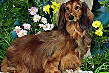 Available For Purchase: Pre-made / Painted Portraits at affordable prices http://www.debbiespaintedpets.com/available-paintings-for-purchase.html