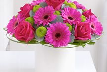 Germini / Germini (Mini Gerbera) are well known for their cheeriness and happiness, as its flowers come in a variety of colour. / by Interflora - The flower experts