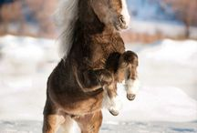 HORSES!!!!!! / by Delaney Haines