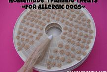 Dehydrator dog treats