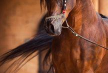 Hästar / Djur