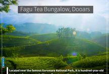 Fagu Tea Bungalow, Dooars