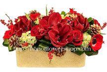 Hanoi Christmas Flowers