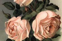 Чайные розы...